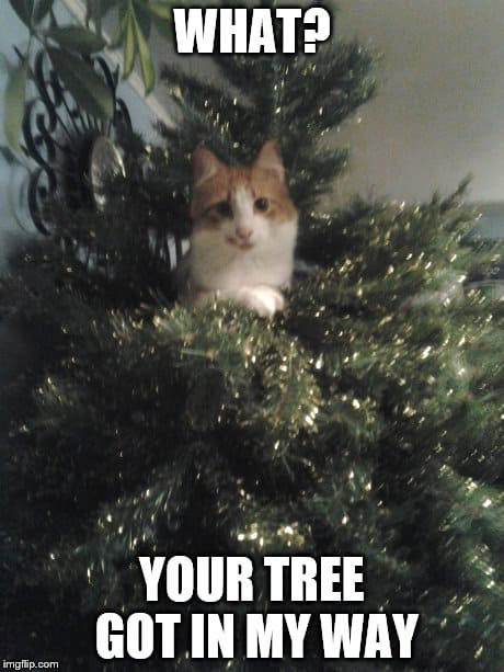 20 Super Funny Christmas Memes (Volume 2) | SayingImages.com