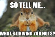 whats driving you nuts squirrel meme