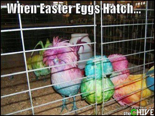20 Happy Easter Egg Hunting Memes   SayingImages.com