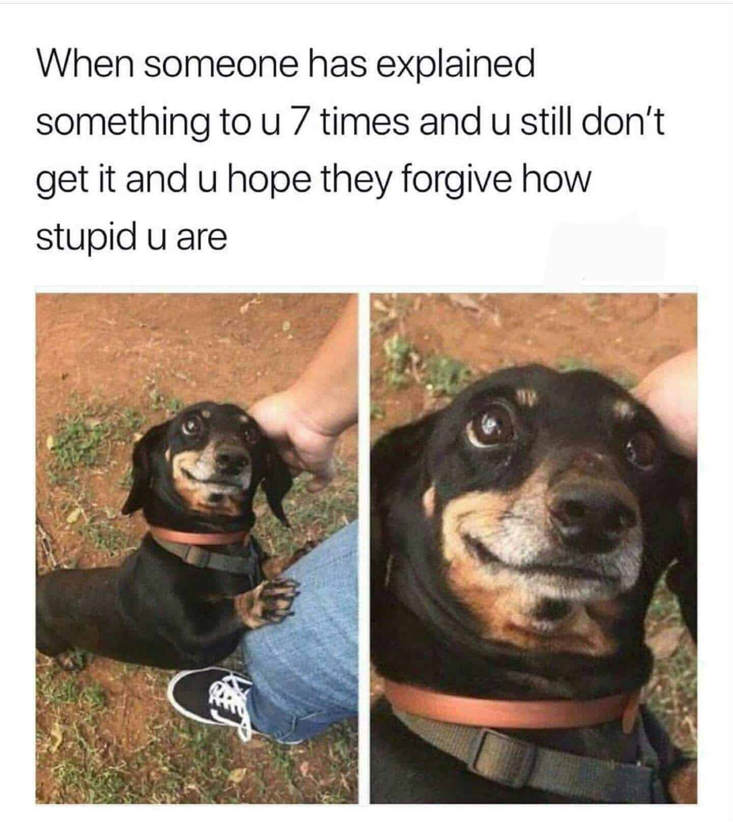 How Can You Tell If Dogs Want Somthing