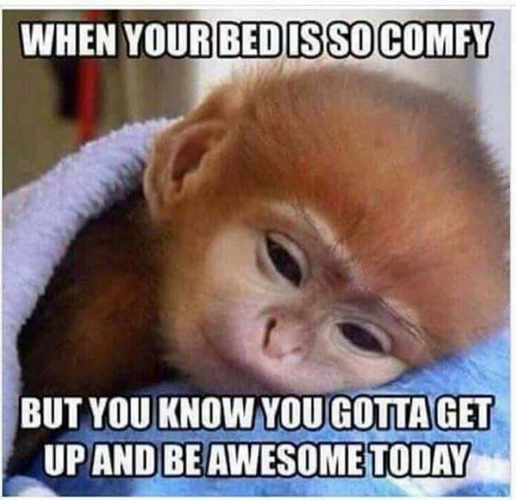 when your bed is so comfy good morning funny meme 20 funny good morning memes that will surely make your day
