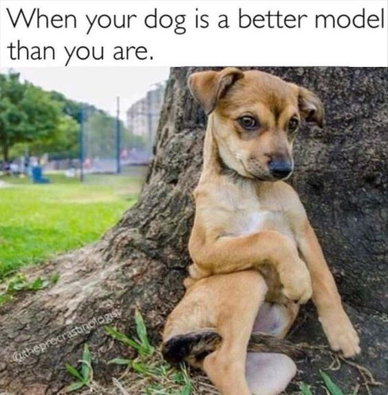 30 Funny Animal Memes You'll Be So Glad to See ...