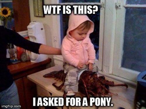 wtf pony meme