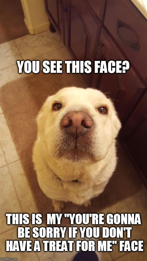 Funny dog faces memes - photo#32