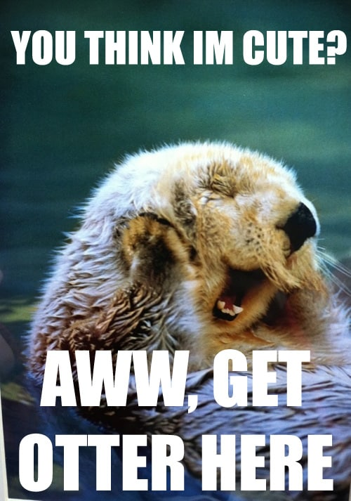 you think im cute aww get otter here blushing meme 20 blushing memes that are way too cute to be resisted