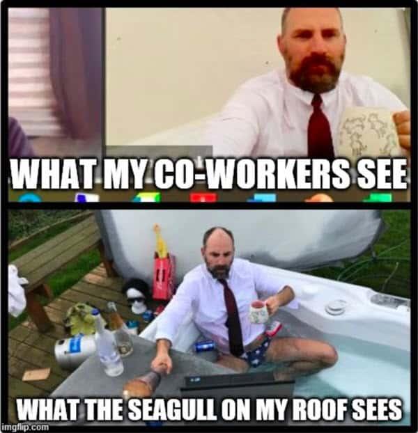 zoom meetings what seagull sees memes