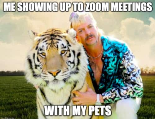 zoom meetings with pets memes
